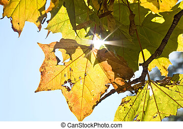 Colorful fall leaf.