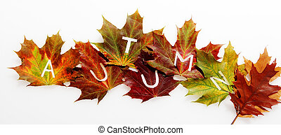 Colorful fall leaves in an Autumn concept