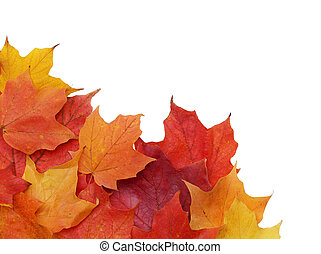 colorful fall leaves in the lower left corner