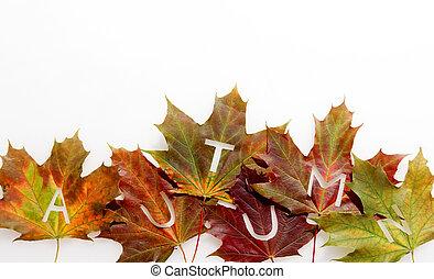 Colorful fall or autumn leaf border