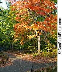 Colorful Fall Tree in Central Park, New York City