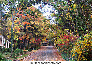 Fall colors bright along this tree lined street