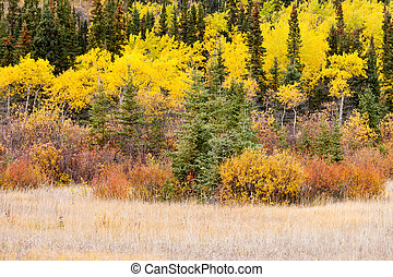 Colorful fall Yukon Canada boreal forest taiga - Colorful...