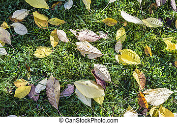 colorful fallen leaves lying in the green grass