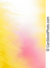 colorful feathers background