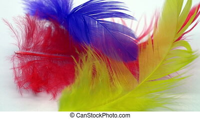 Colorful feathers slow motion