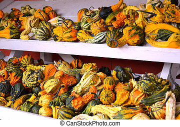 Colorful Festive Gourds Stacked on Shelves at Farmer's Market