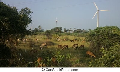 Colorful filming modern rustic idyll (pastoral) in India...