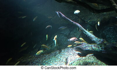 Colorful fish floating near rock in the dark deep
