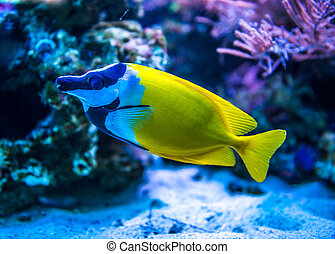 Colorful fish in aquarium