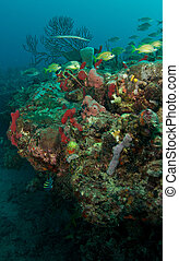 Colorful FIsh on a Tropical Coral Reef