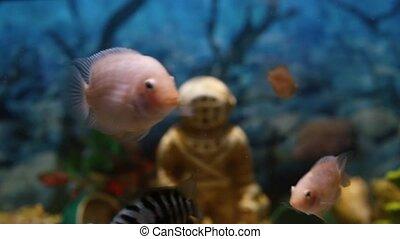 Colorful fish swim peacefully in an aquarium