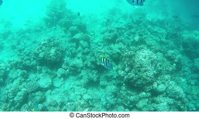 Colorful Fishes and Corals at the Beautiful Tropical Island...