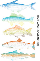 colorful fishes, vector
