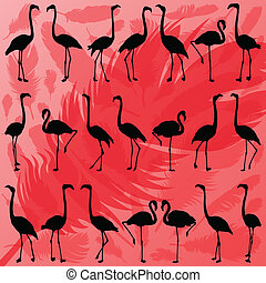 Colorful flamingo bird and feathers silhouettes illustration collection background vector