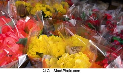 Colorful flower bouquets in transparent plastic gift wrap in local florist marketplace shop at sunlight in spring extreme closeup