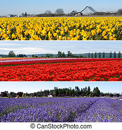 Colorful flower fields collage