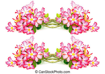 Impala Lily - Colorful flower, Impala Lily, a beautiful red ...