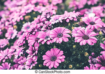 Colorful flower in spring time for background