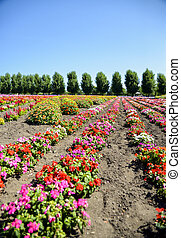 Colorful flower in the row1
