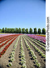 Colorful flower in the row2