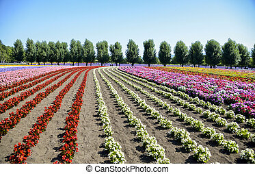 Colorful flower in the row3