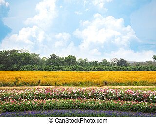 Colorful flower meadow and blue sky