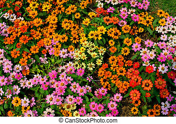 colorful flower texture