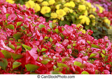 Colorful flowerbed on a summer sunny day. Bright pink and yellow flowers. Close-up of garden bed. Blurred floral background. Shallow depth of field.