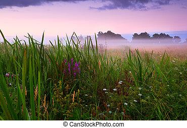 flowering meadow in fog