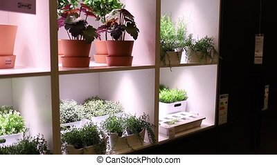 FHD Video of colorful small flowers and plants on flowerpots displayed in an illuminated shelf