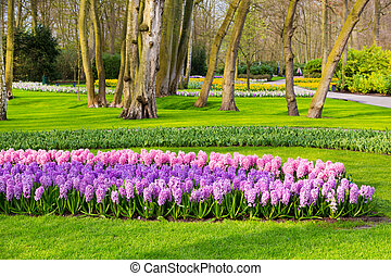 Colorful flowers blossom in dutch spring garden Keukenhof, Holland