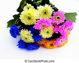 Close-up of colourful aster flowers against white background