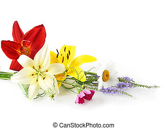 Colorful flowers - Cofolful flowers, isolated on white...