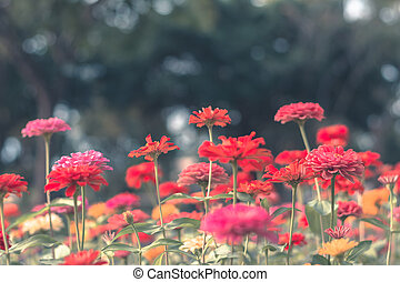 Colorful flowers for background .