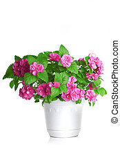 Colorful flowers growing in a pot