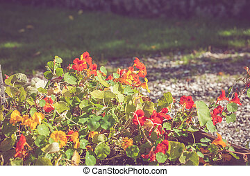 Colorful flowers in a garden