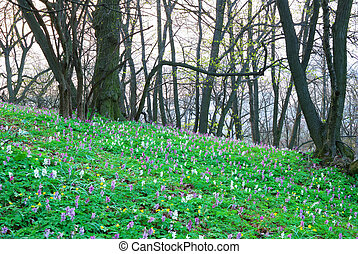 Colorful flowers in an early spring forest