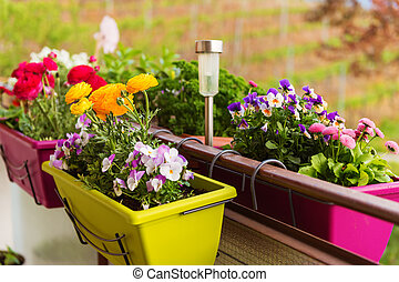 Colorful flowers in pots on the balcony