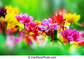 Colorful fresh flowers in a sunny green spring garden