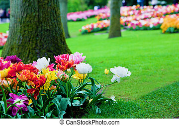 Colorful flowers in spring park, garden