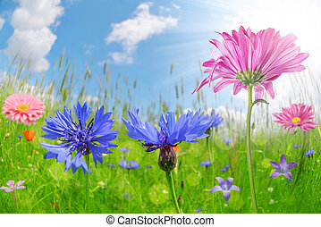 Colorful flowers in the meadow.