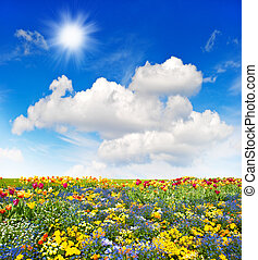 colorful flowers meadow and green grass field over blue sky
