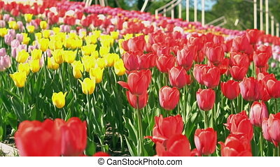 Colorful flowers on the green grass