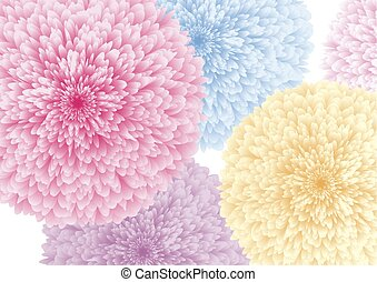 Colorful flowers on white background vector illustration