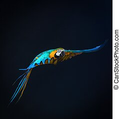 Colorful flying Ara on a dark background