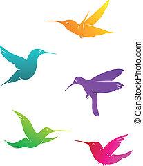 Colorful flying hummingbirds set isolated on white...