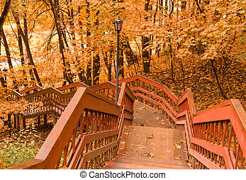 Colorful foliage in the autumn park