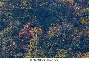 Colorful foliage in the autumn