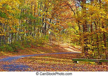 colorful foliage, közül, deciduous fa, mentén, a, liget, trail., egy, sétány, alatt, ősz, -ban, a, nemzeti arboretum, washington, dc.